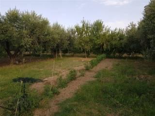 Foto - Terreno agricolo in Vendita a San Salvo