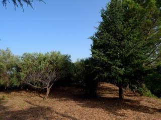 Foto - Terreno agricolo in Vendita a Santa Lucia del Mela