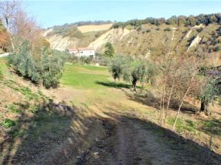 Foto - Terreno agricolo in Vendita a Notaresco