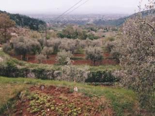 Foto - Terreno agricolo in Vendita a Rocca di Cave
