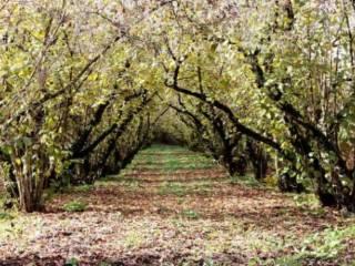 Foto - Terreno agricolo in Vendita a Poggiomarino
