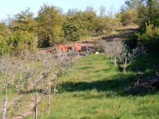 Foto - Terreno agricolo in Vendita a Vejano