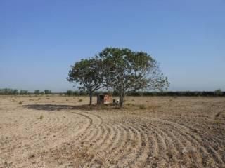 Foto - Terreno agricolo in Vendita a Cerignola