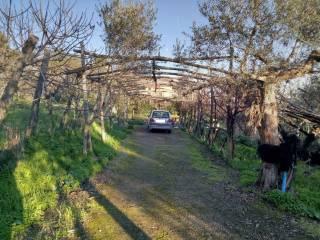 Foto - Terreno agricolo in Vendita a Massa Lubrense