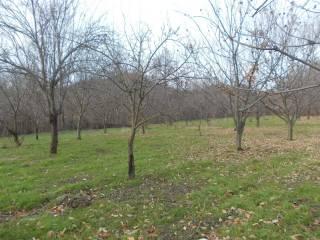 Foto - Terreno agricolo in Vendita a Chiusa di Pesio