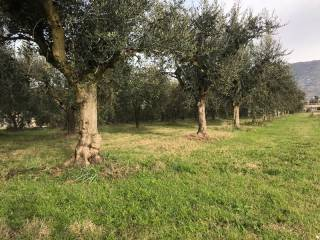 Foto - Terreno agricolo in Vendita a Passignano sul Trasimeno