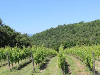 Foto - Terreno agricolo in Vendita a Castel Campagnano