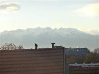 Foto - Appartamento via Zumaglia 5, Parella, Torino