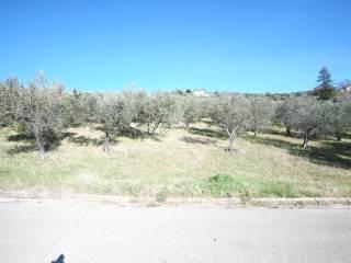 Foto - Terreno agricolo in Vendita a Poggio Moiano