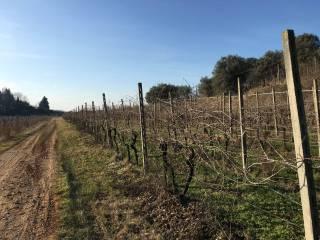 Foto - Terreno agricolo in Vendita a Valeggio sul Mincio