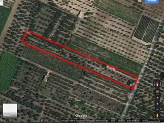 Foto - Terreno agricolo in Vendita a Bitonto