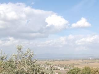 Foto - Terreno agricolo in Vendita a Panicale