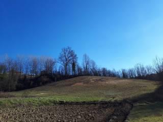 Foto - Terreno agricolo in Vendita a Celle Enomondo