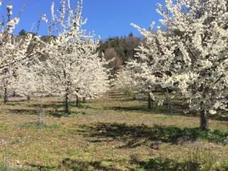 Foto - Terreno agricolo in Vendita a Biancavilla