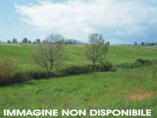 Foto - Terreno agricolo in Vendita a San Giustino
