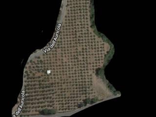 Foto - Terreno agricolo in Vendita a Amaseno