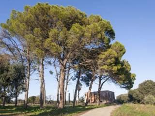 Foto - Rustico, da ristrutturare, 340 mq, Latiano