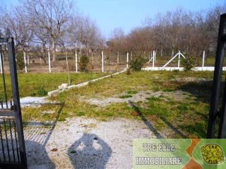 Foto - Terreno agricolo in Affitto a Marigliano