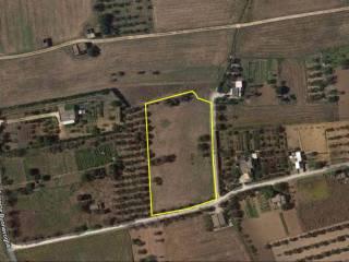 Foto - Terreno agricolo in Vendita a Cutrofiano