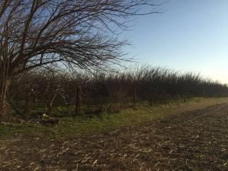 Foto - Terreno agricolo in Vendita a Mondragone