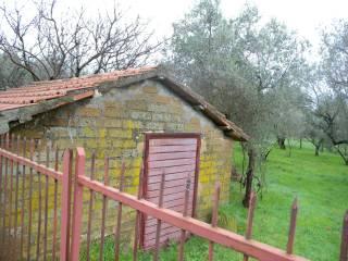 Foto - Terreno agricolo in Vendita a Gradoli