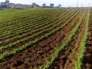 Foto - Terreno agricolo in Vendita a Ramacca