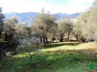 Foto - Terreno agricolo in Vendita a Malcesine