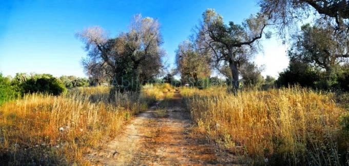 foto terreno Terreno agricolo in Vendita a Alessano