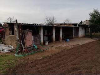 Foto - Terreno agricolo in Vendita a Civita Castellana