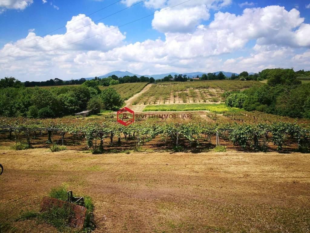 foto  Azienda agricola in Vendita