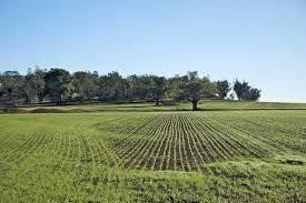 Foto - Terreno agricolo in Vendita a Caluso
