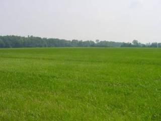 Foto - Terreno agricolo in Vendita a Palosco