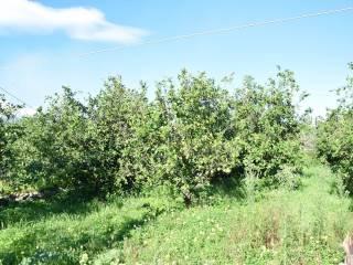 Foto - Terreno agricolo in Vendita a Giarre