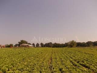 Foto - Terreno agricolo in Vendita a Nepi