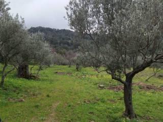 Foto - Terreno agricolo in Vendita a Tusa