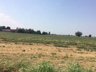 Foto - Terreno agricolo in Vendita a Medesano