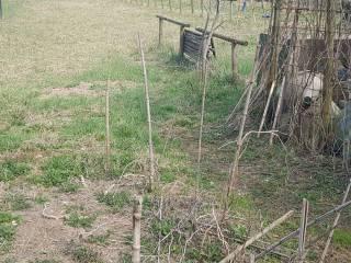 Foto - Terreno agricolo in Vendita a Iseo