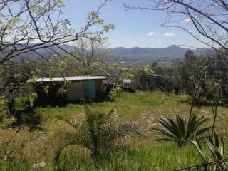 Foto - Terreno agricolo in Vendita a Frasso Telesino