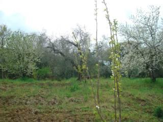 Foto - Terreno agricolo in Vendita a Fara in Sabina