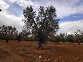 Foto - Terreno agricolo in Vendita a Leverano