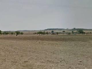 Terreno edificabile agricolo provincia bari vendita e for Case in affitto altamura arredate