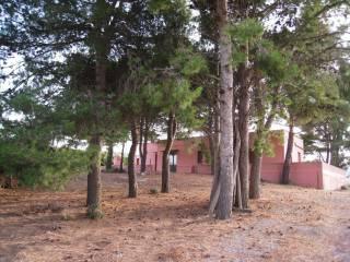 Foto - Terreno agricolo in Vendita a Valderice