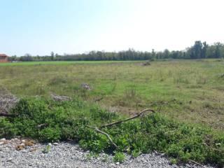 Foto - Terreno agricolo in Vendita a Alice Castello