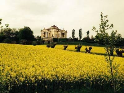 foto  Single family villa, excellent condition, 300 sq.m., Monticello Conte Otto