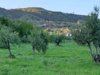 Foto - Terreno edificabile residenziale a Montauro