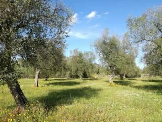 Foto - Terreno agricolo in Vendita a Sanarica