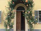 Casa indipendente Affitto Torino