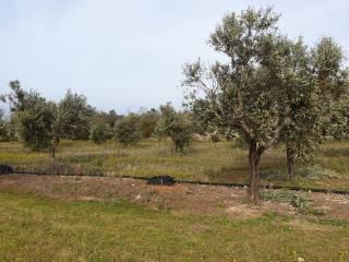 Foto - Terreno edificabile residenziale a Racale