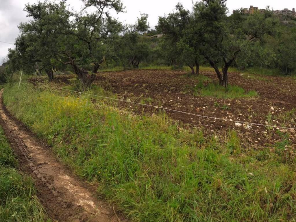 foto  Terreno agricolo in Vendita a Sant'Angelo Romano