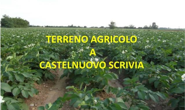 TERRENO AGRICOLO IN VENDITA A CASTELNUOVO SCRIVIA Rif.10453649